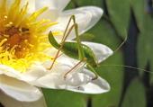 La fleur et l'insect.