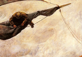 Puzzle Krohg_Christian_Fixing_The_Sail