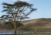 lac Nakuru - Kenya