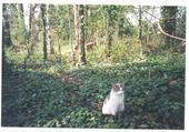 chat-bois