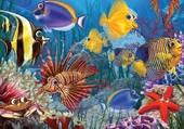 Puzzle poissons marins