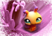 escargot petshop