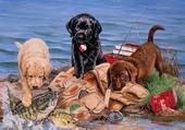 chiens a la pêche