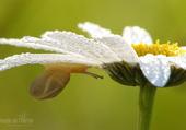 Fleur et escargot