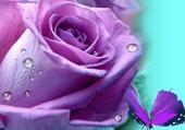rose par hel