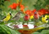 Puzzle Oiseaux