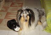 loukoum chat et unja