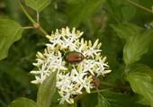 insecte en harmonie