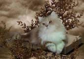 Puzzle chat blanc