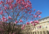 Puzzle Jardin du Palais-Royal à Paris