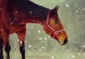 Cheval bai sous la neige
