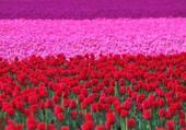 champs fleuries