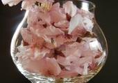 Fleurs d'amandiers