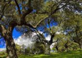 Puzzle vieux arbres