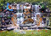 le repos des tigres