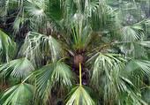 Puzzle Le palmier de Delhi
