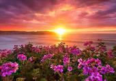 paysage de fleurs