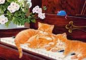 les 3 chats