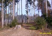 Puzzle Forêt