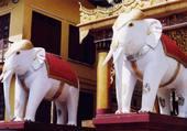 Kitschs éléphants