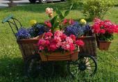 charrette de fleurs