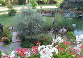 Fleurs et bassin