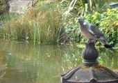 Puzzle le pigeon