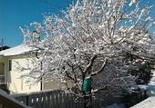 1 er neige d'automne