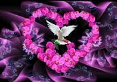 Pureté De L'Amour