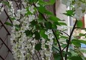 Gros plan sur petit arbuste