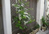 Arbuste devant maison