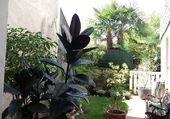 cour jardin