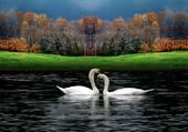 le lac des cignes