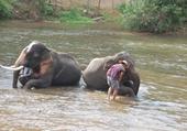 Elephants et leur karnac