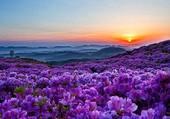 Puzzle violette