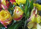 Roses et Orchidées