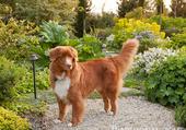 Roxy au jardin