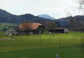 Ferme  à Oron / VD / Suisse