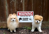 Attention aux chiens