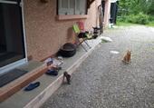 chat bruyeres