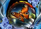 Bulle De Papillon