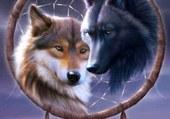 La Protection Des Loups