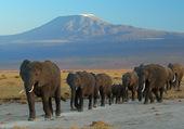 Puzzle Eléphants et Kilimandjaro