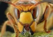 Puzzle Insecte grop plan