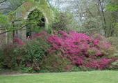 Puzzle arboretum de balaine