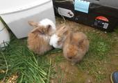 c'est des bébés lapins