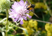 La mouche et la fleur
