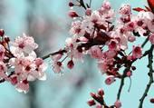 Puzzle fleurs par helene