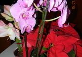 Bouquet orchidées 1