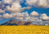 Sunflower valley - Spain